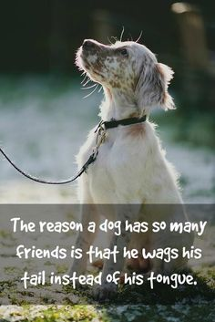 The reason a dog has...