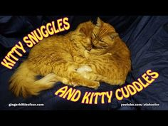Sunday Afternoon #Kitty #Cat Cuddles - YouTube