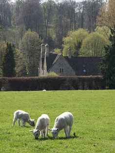 Cotswolds ~ Coln St Aldwyns in spring ~ Gloucestershire sheep England Ireland, England And Scotland, England Uk, English Country Cottages, English Village, Town And Country, Country Life, Country Charm, Country Living
