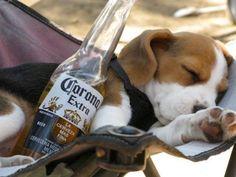 Beagle. Love. Hops