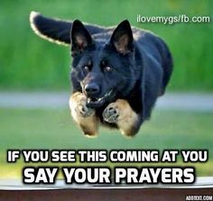 You can't out run a GSD www.capemaydogs.com