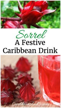 Find out about the history and origins of sorrel, one of the more traditional and festive drinks in the Caribbean at Christmas. #Sorrel #Christmas #Caribbean #CaribbeanChristmas