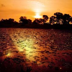 #iphonography #photooftheday #nikond90 #india #gujarat #vadodara #baroda #indian #gujarati #iphonesia #instagram #webstagram #instagood #statigram #tweegram #me #jj #awesome #lake #sunset #sunrise #sun #mahisa