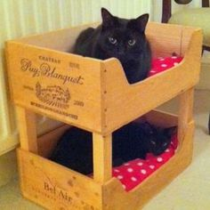 Cat bunk beds made of wooden wine boxes - Ideal toys for small cats Cat Bunk Beds, Pet Beds, Wooden Wine Boxes, Wine Crates, Ideal Toys, Cat Room, Pet Furniture, Small Furniture, Cheap Furniture