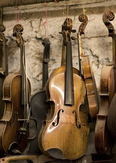 Fiddles hanging in Paul Doyle's workshop, Galway