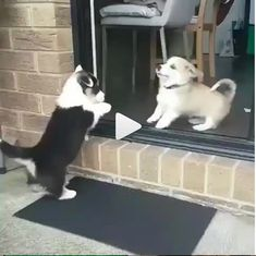 all funny stuff around the world pics and gifs Cute Funny Dogs, Cute Funny Animals, Cute Baby Animals, Cute Cats, Corgi Funny, Top Funny, Cute Corgi Puppy, Cute Puppies, Dogs And Puppies