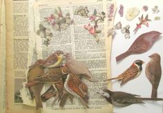 I used similar papers to decoupage over an old clipboard. This pack has the background papers as well as birds and flowers. Vintage paper decoupage kit birds flowers by PinkFlamingoEphemera, £4.50