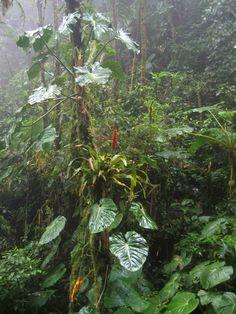 Cloud forest panama