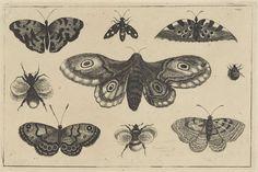 Wenceslaus Hollar | Mot, vier vlinders, twee hommels en twee andere insekten, Wenceslaus Hollar, 1644 - 1652 |