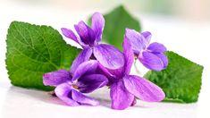 Překvapení! Fialka není jen voňavá, ale i léčivá bylinka k zakousnutí Herbs, Jar, Plants, Gardening, Lawn And Garden, Herb, Plant, Jars, Glass