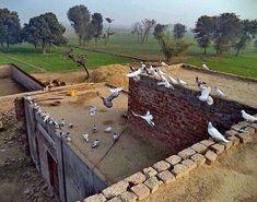 Sajjri Swer Pic From Pind. 🕊 #pind #apnaPunjab #😍 #virsa #panjablife #colorsofpanjab #punjabivirsa Punjab Culture, India Culture, Village Photography, Pakistani Culture, Rural India, Life Photo, Culture Travel, World Cultures, Places To Travel