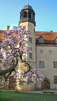 The famous sites of the Reformation in Wittenberg are among the most important places in German history. Luther's former home is probably the world's largest museum dedicated to the history of the Reformation.