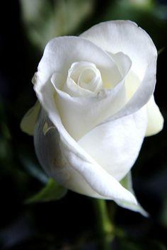 Make sure to keep your eyes peeled for HTKAF's white rose headband.  www.howtokissafrog.com www.circuslondonpr.com