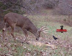 DeerHuntingGuide:http://www.deerhuntingbigbucks.com/deer-hunting/