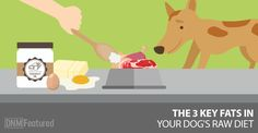 dietary fat every raw fed dog needs