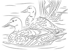 Elegant Picture of Duck Coloring Pages Duck Coloring Pages Pair Of Mallard Ducks Coloring Page Free Printable Coloring Pages Bird Coloring Pages, Free Printable Coloring Pages, Adult Coloring Pages, Coloring Sheets, Coloring Books, Duck Drawing, Leather Tooling Patterns, Duck Art, Wood Burning Patterns