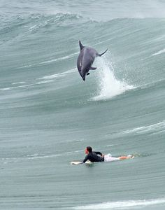 surfing fun. I remember being knock off my board years ago by a dolphin