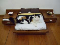 22 Cats That Are Living a Better Life than You Right Now