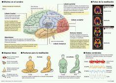 Efectos de la #Meditacion resumido en una buena imagen con las áreas del #cerebro.