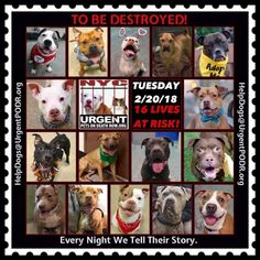 """***16 LIVES TO BE DESTROYED 02/20/18 @ NYC ACC***SO MANY GREAT DOGS ARE BEING KILLED: Puppies, Throw Away Mamas, Good Family Dogs. This is a HIGH KILL """"CARE CENTER"""" w/ poor living condition. Please Share! Click for info & Current Status: http://nycdogs.urgentpodr.org/to-be-destroyed-4915/"""
