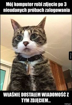 Funny pictures of cats, funny cat pics, funny cat names, kitten names, Animals And Pets, Baby Animals, Funny Animals, Cute Animals, Animals Images, Funny Cat Names, Funny Dogs, Fun Funny, Kitten Names