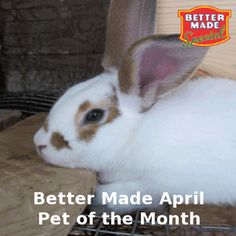 Pet of the Month Contest Winner