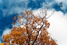 Colourful autumn leaves #Finland #autumn #leaves Autumn Leaves, Finland, Birds, Clouds, Pictures, Outdoor, Color, Fall Leaves, Photos
