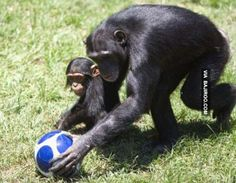 We Bet You Never Seen Animals Playing Football (21 Photos)