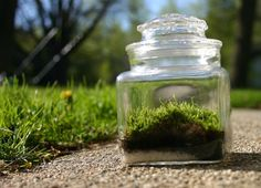 Moss Terrarium Green   Earth Day Great as a by 8daysOfTreasures, $9.99