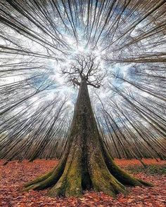 what a grest shot! 🤗Credit to : Ancient tree 🍂 Chêne Stebbing, Forêt de Tronçais, France. Photo by Shared with thanks by Help Sales Marketing Landscape Photography, Nature Photography, France Photography, Fashion Photography, Unique Trees, Tree Art, Amazing Nature, Belle Photo, Nature Photos