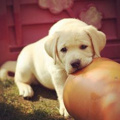 """""""Come back later. I'm very busy feeling sorry for myself."""" 