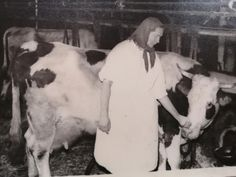 Cow, Horses, Retro, Animals, Animales, Animaux, Cattle, Animal, Animais