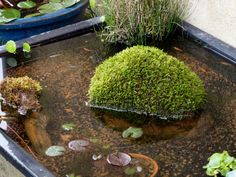 P6055159 (1) Indoor Pond, Indoor Water Garden, Pond Landscaping, Ponds Backyard, Garden Terrarium, Bonsai Garden, Small Water Gardens, Outdoor Water Features, Moss Garden