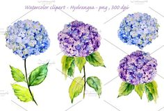 Watercolor Blue Hydrangea by Corner Croft on @creativemarket