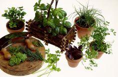 Frische Kräuter sind lecker. Damit sie im Kräutergarten gedeihen, sollte beim Anlegen nichts dem Zufall überlassen werden. Beispiele zeigen, warum.