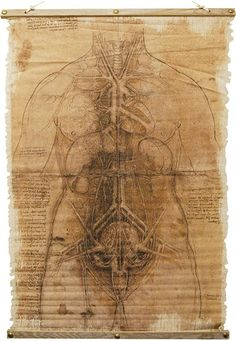 An Ancient Scroll Has Been Uncovered That Shows The Real Anatomy Of Man! Aged Looking Cloth Scroll Has A Top And Bottom Wood Frame Piece. Pencil-Look Drawing Shows What Appears To Be Some Evil Inside! Canvas Measures Approximately X X Asylum Halloween, Halloween Express, Draw Show, Vampire Skull, Scary Costumes, Halloween Costumes, Horror Pictures, Detailed Tattoo, Scary Halloween Decorations