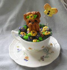 Yorkie in Teacup