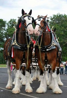 1000+ images about Draft horses and logging on Pinterest ...