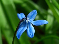 Gardening Tips. There are a lot of things you need to pay attention to when it comes to gardening, and that means you need to educate yourself with some handy gardening advice. It's not easy to garden by yourself, especially if you are inexperienced. Blue Bell Flowers, Blue Orchids, Organic Gardening Tips, Nature Plants, Blossom Flower, Horticulture, Nature Photos, Mother Earth, Garden Landscaping