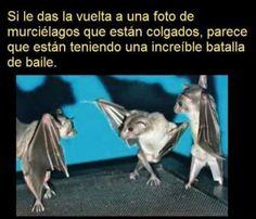 Dar la vuelta a foto de murciélagos. #humor #risa #graciosas #chistosas #divertidas