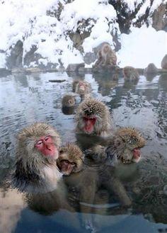 雪景色のなか、温泉につかるニホンザル(桐原正道撮影)