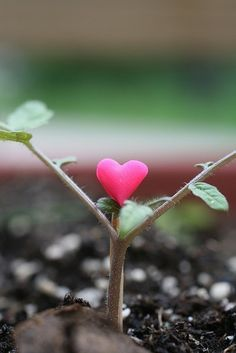 she grew hope & love. Oh My Heart, With All My Heart, Happy Heart, Heart Art, Hope Love, Love Is All, Heart In Nature, In Natura, Love Symbols