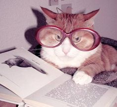 Image from http://nyulocal.com/wp-content/uploads/2014/05/cats-with-books-0.jpg.