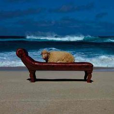 Storm Thorgerson: 10CC- Are You Normal                                                                                                                                                                                 More