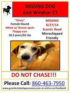 "Missing Female Hound East Windsor CT 8/27/14 ""Ginny"" is 10.5 years/65 lbs, White w/ Brown spots. Floppy ears. Microchipped & Friendly. Missing from Scantic Rd. Please call with any info: 860-463-7950"