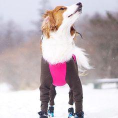 なんか上から冷たいものが落ちてくる〜❄️🐶#耳がペラ #耳換気中 #snow #雪 #snowplay #雪遊び #alphaicon #docdog #くるる家の週末 #清里 #カメラ #camera #一眼レフ #α6000 #sony #ファインダー越しの私の世界 #dog #いぬ #犬 #イヌ #わんこ#コイケル #コーイケルホンディエ #kooiker #kooikerhondje #lovemydog #nodognolife #mydog #絶対犬派