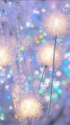 Holiday Lights, Christmas Lights, Dandelion, Flowers, Plants, Christmas Fairy Lights, Dandelions, Plant, Taraxacum Officinale