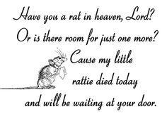 Please Lord watch over my 4 legged little rattie children...