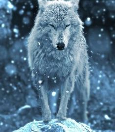 ((Closed RP)) Sapphire: (wolf form) *looking up at the falling snow, then huffing and shaking the wetness off of her fur* Beautiful Creatures, Animals Beautiful, Cute Animals, Wolf Spirit, Spirit Animal, Wolf Pictures, Animal Pictures, Tier Wolf, Wolf Hybrid