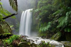 Photo about Hopetoun Falls, a temperate rainforest waterfall in Victoria, Australia. Image of misty, waterfall, river - 10283783 All Nature, Nature Images, Nature Pictures, Belize Barrier Reef, Trinidad, Bible Verses About Nature, Marie Von Ebner Eschenbach, Les Cascades, Seen